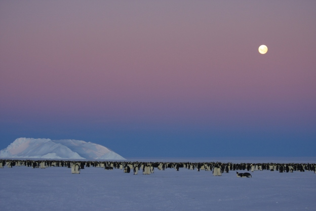 By May, in Antarctica, the days are short. At three in the afternoon a full moon rises to bathe the ice with light. ©Robyn Mundy