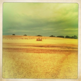 Wheat fields, South Australia