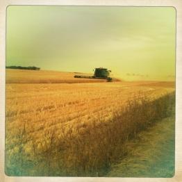 Harvest time, South Australia